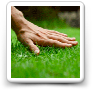Lawn Mowing Tips for Healthy Lawns & Personal Safety