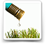 Lawn Watering Tips:  Better Results with Less Water